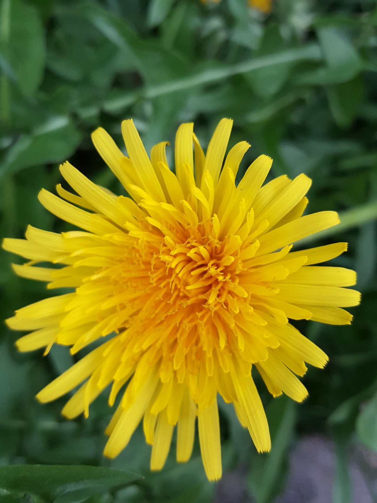 Yellow Flower Beauty In Nature Flower Head Macro Nature Plant Flores Flower Collection Floer Floral
