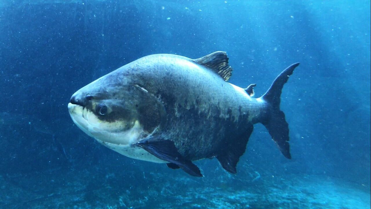 one animal, underwater, animals in the wild, animal themes, undersea, sea life, fish, animal wildlife, sea, no people, swimming, nature, day, close-up, outdoors, mammal