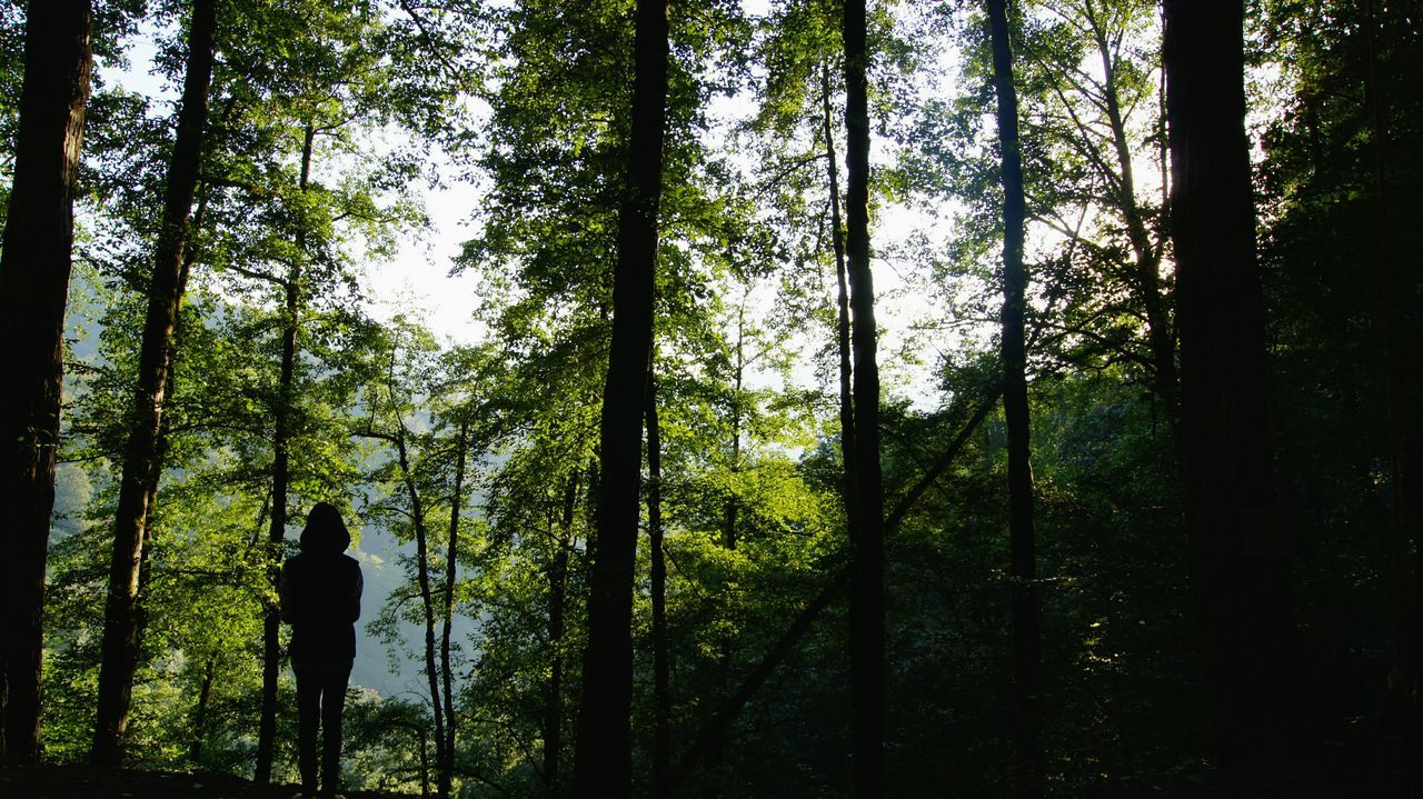 tree, forest, nature, rear view, walking, tree trunk, growth, tranquil scene, beauty in nature, woodland, one person, tranquility, real people, day, scenics, landscape, outdoors, hiking, branch, full length, people