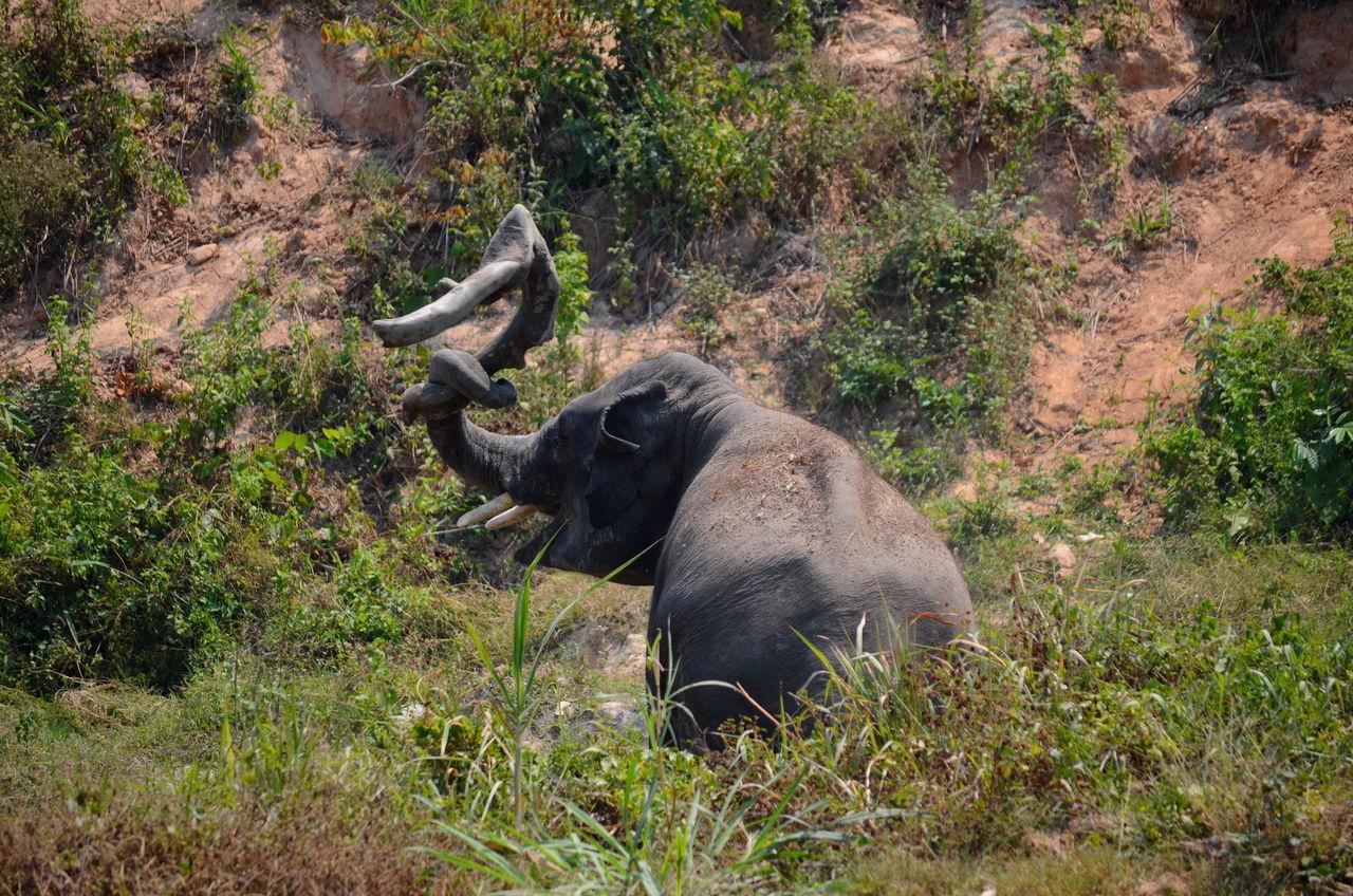 Beautiful Nature Elephant ♥ Enjoying Life Extreme Close-up Lovely No People Playing Wildlife & Nature