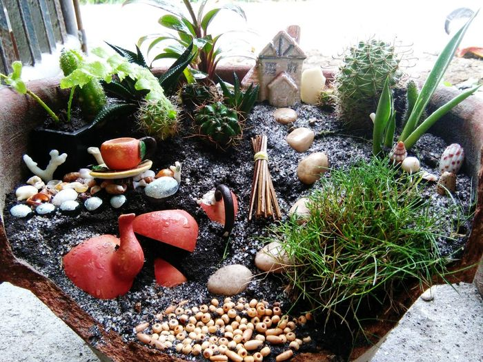 the first ever fairy garden that i made. 😚 Nature Garden Art Miniaturegarden Fairygarden Closeupshot Closeup Photography Closeup In Nature Naturefriends Earthfriendly
