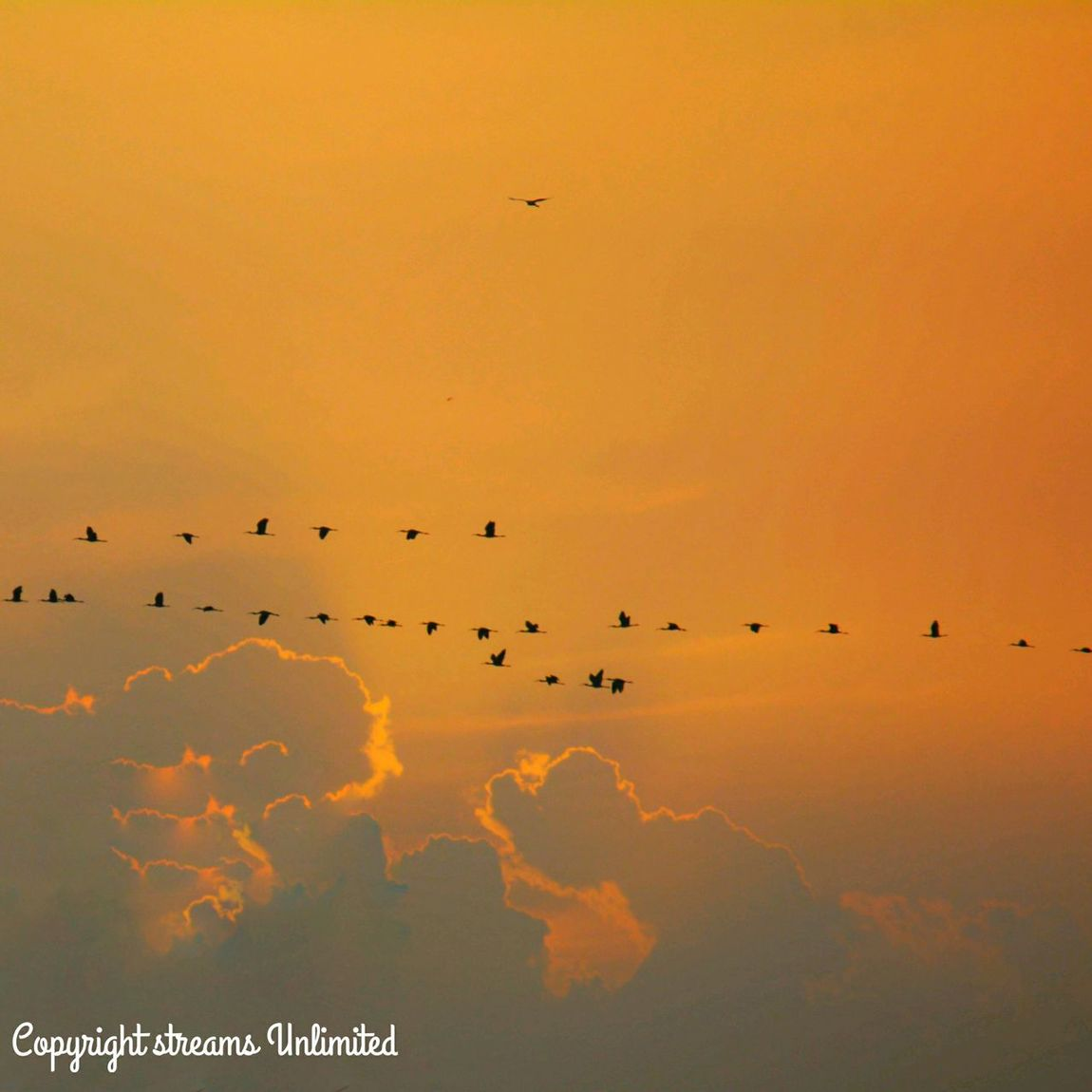 Morning Dawn! Birds are flying for food, showering of golden rays on earth, magnificent cool breeze imparting strength to enliven new life! Dawn Of A New Day Morning Sky Sky And Clouds Birds At Sky Travel Photography Enjoying Life Hello World Living With Nature Good Morning✌♥ Morning Glow