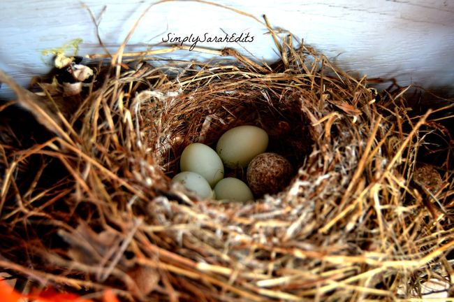 This is my favorite because it shows the warmth and beauty in nature. Animal Egg Bird Eggs Birds Nest Brown Close-up Colored Eggs Day Detail Details Details Of Nature Eggs Group Of Objects Growth Hay Large Group Of Objects Nature Nest No People Outdoors Rural Scene Selective Focus My Favorite Photo