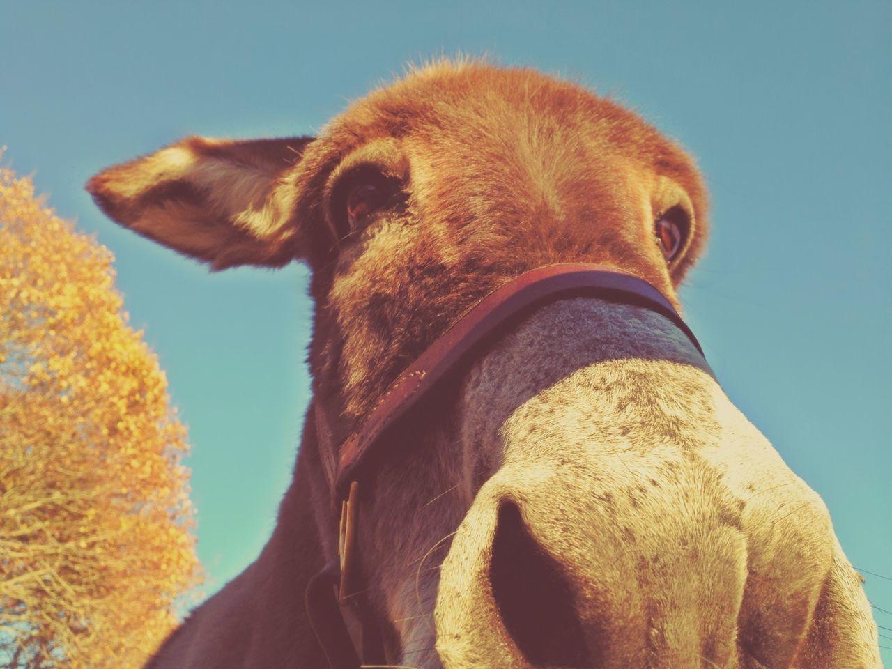 Beautiful stock photos of funny animal, Animal Head, Animal Themes, Camel, Captivity