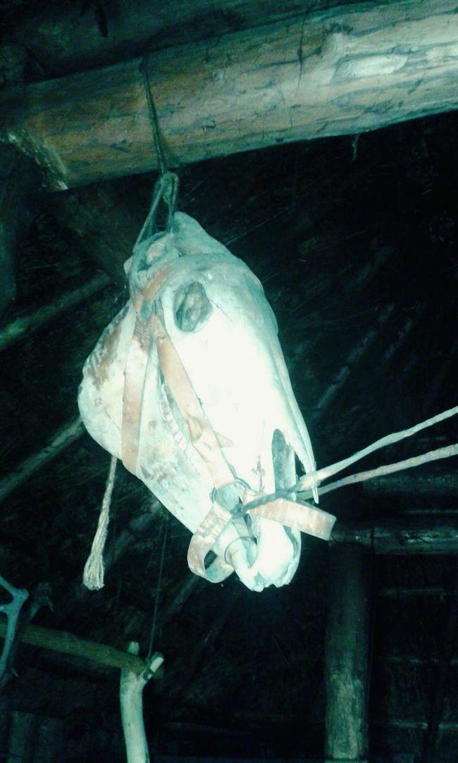 """Lucky charm of slavic vikings"" Horse Head Skull Charm Vikings"