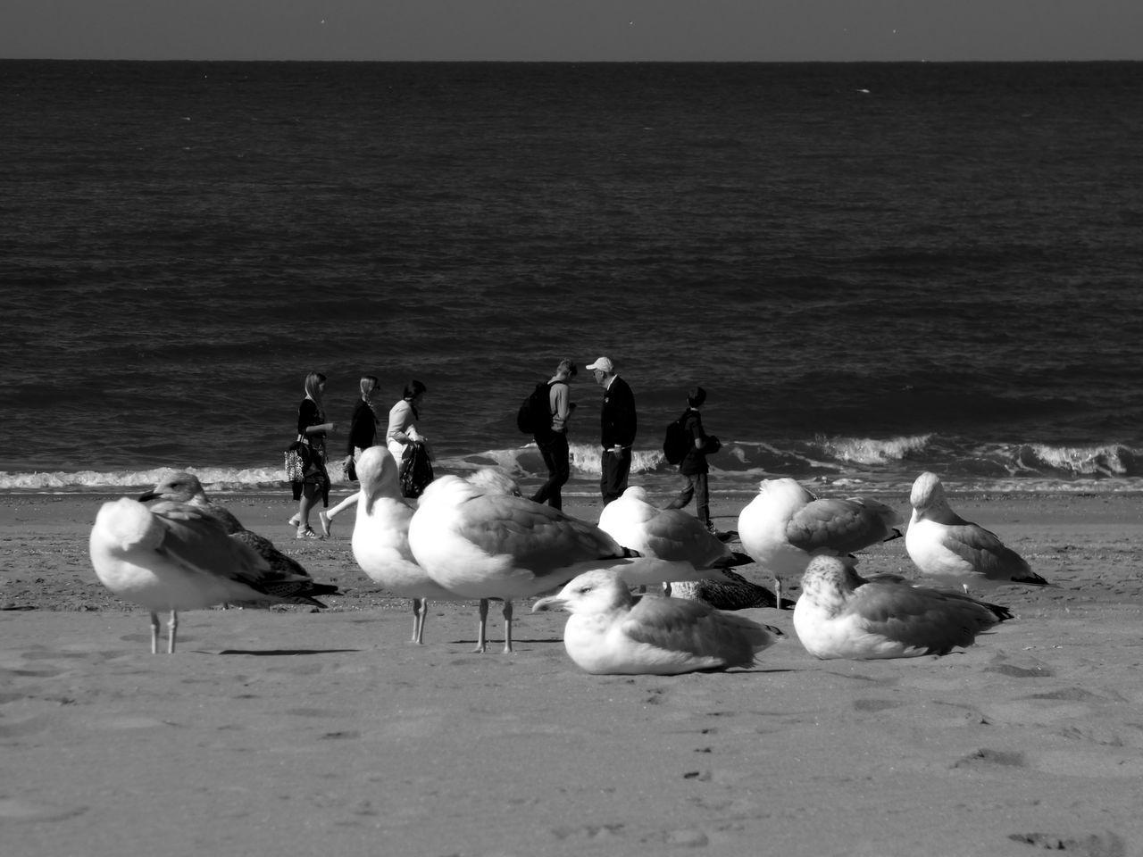 Seagulls On Sea Shore