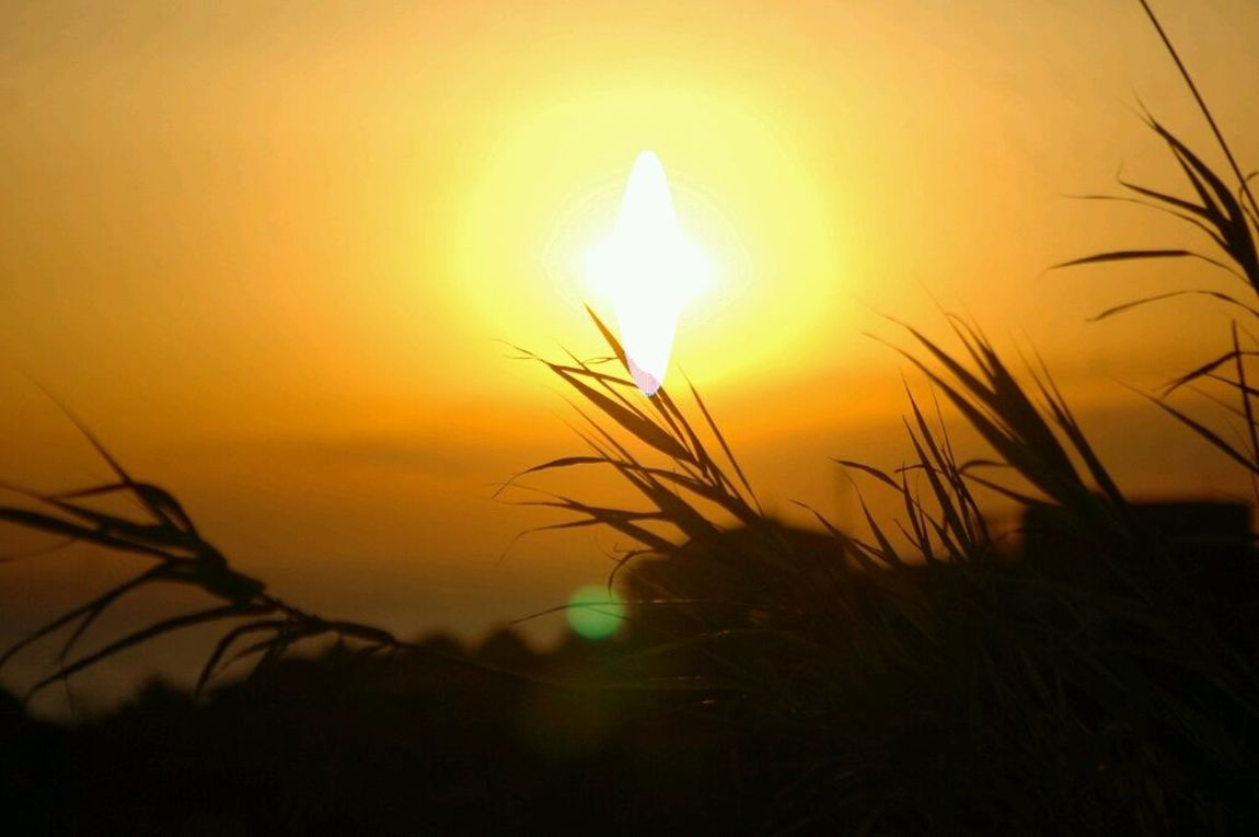 Sunset Enjoying The Sun Nature Sun Reflection