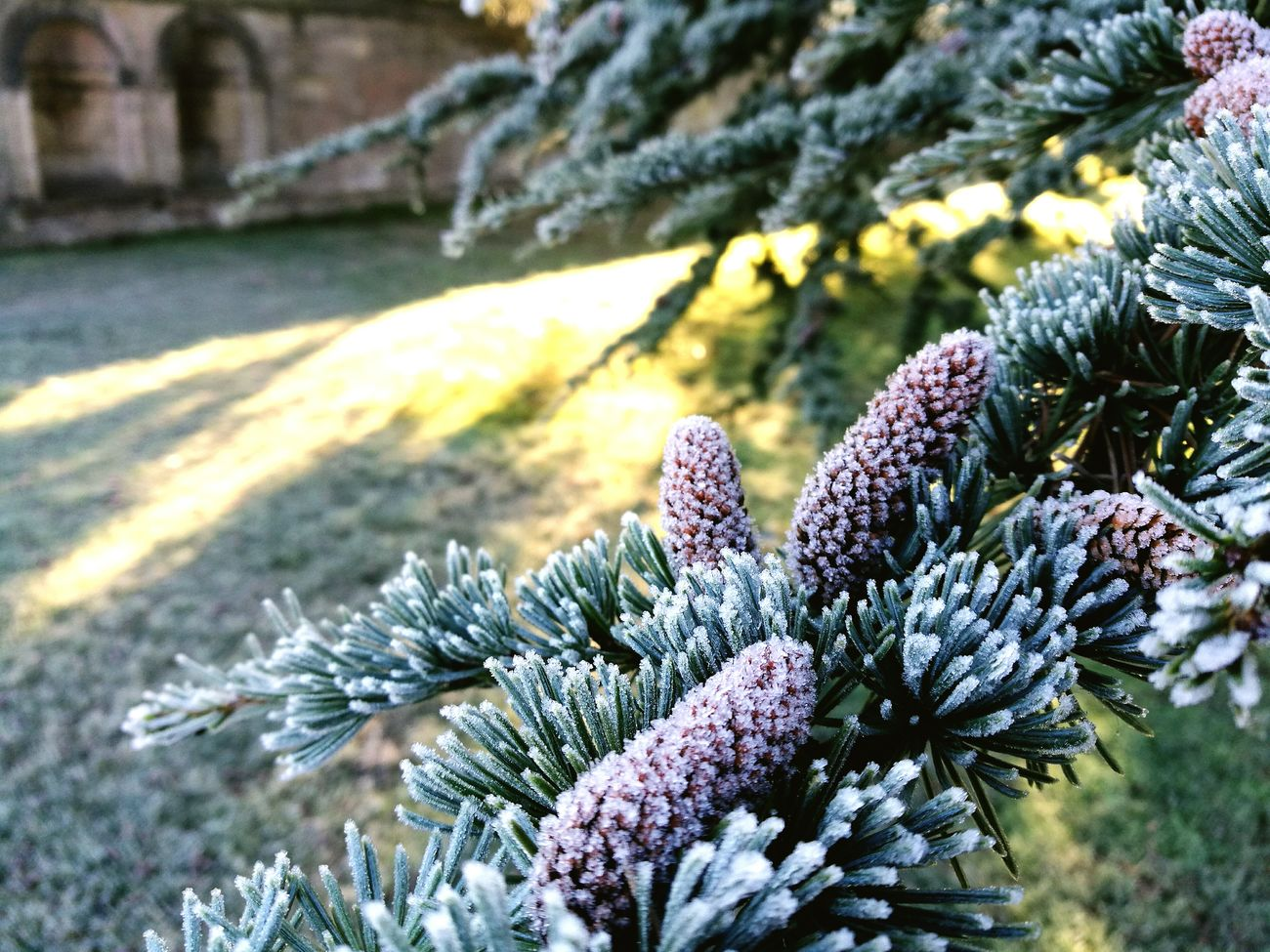 Morning frost Winter Nature Cold Temperature Beauty In Nature Outdoors Close-up