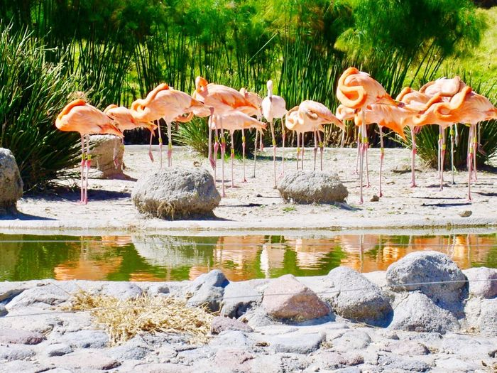 Flamingo Bird Animals In The Wild Water Animal Wildlife Animal Themes Reflection No People Nature Lake Outdoors Day Beauty In Nature Pet Portraits