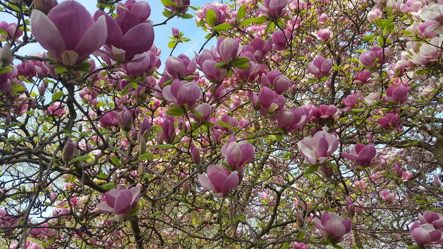 Japanese Cherry Blossom First Eyeem Photo