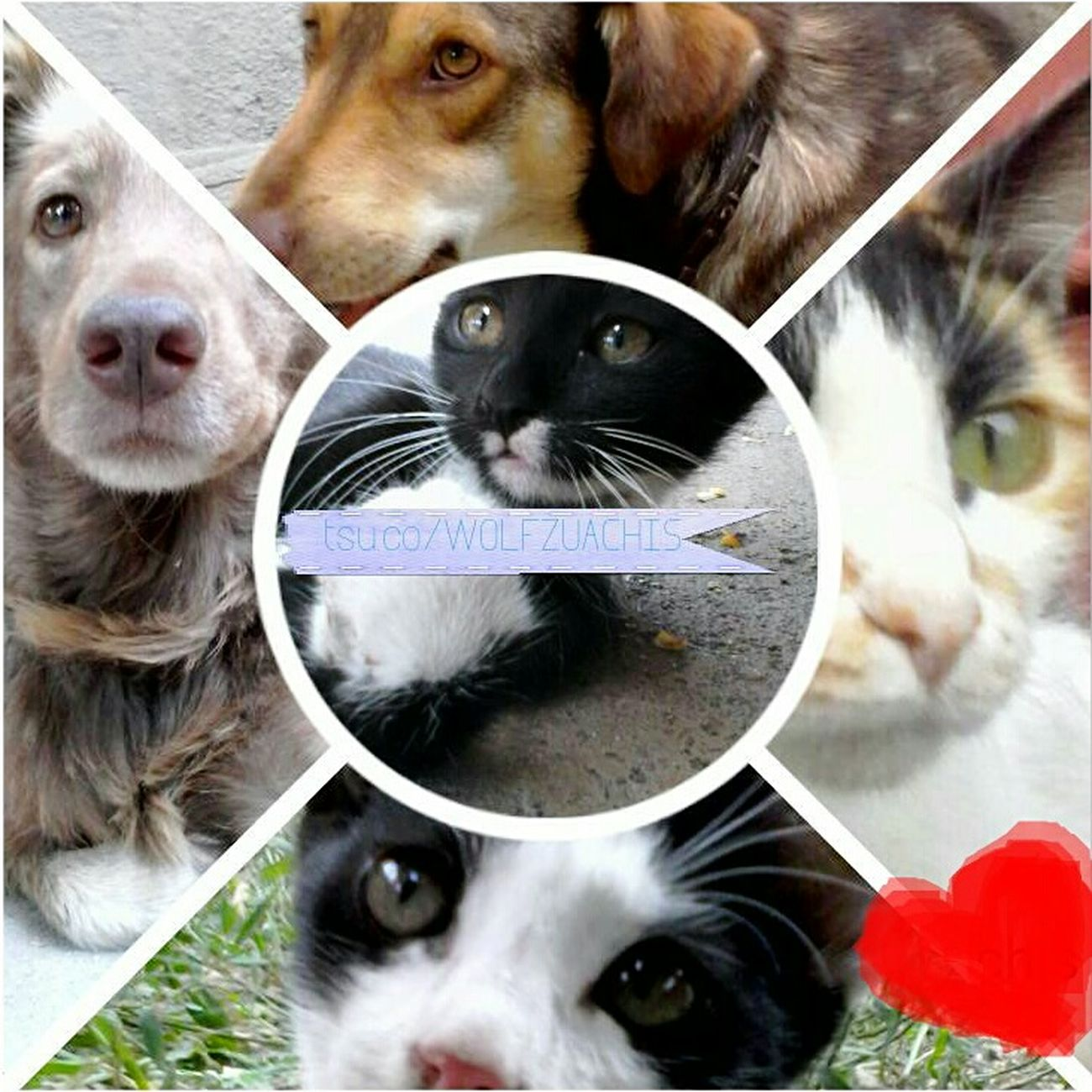 Cute Animals @wolfzuachis Pufosenii Colage Colaj Cats Dogs Wolfzuachis