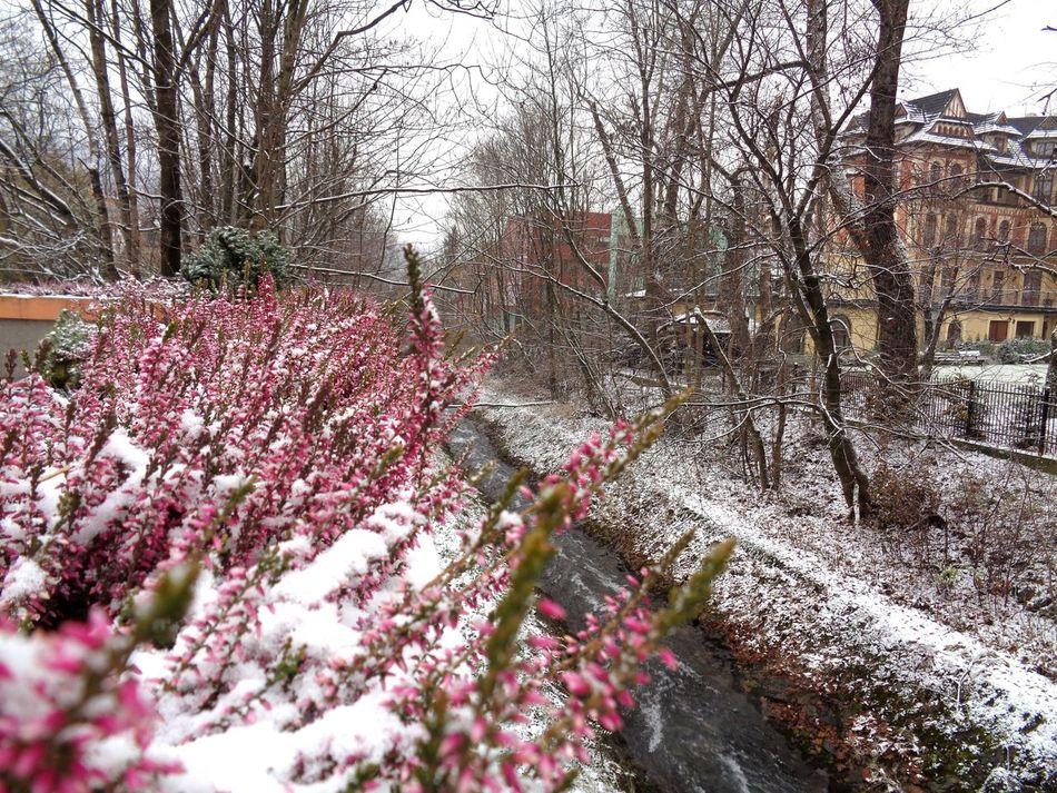 Zakopane ♥ Beauty In Nature Flower Winter Outdoors Nature Tatra Mountains Poland Flower In Snow Creak 💦 Travel Travel Destinations Travelphotography
