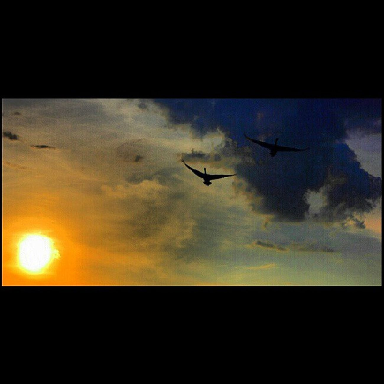 Swans on a painted sky Feather_features Ff_pairs Underdogs_nature Nature_perfection landscape_captures