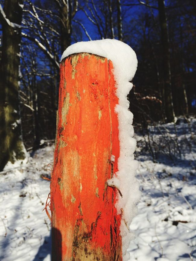 Odenwald  Snow Have A Walk Colors