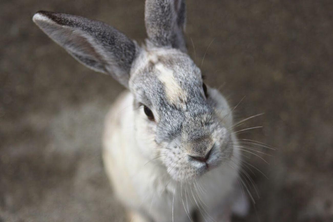 Beautiful stock photos of easter bunny, Animal, Animal Face, Animal Themes, Close-Up