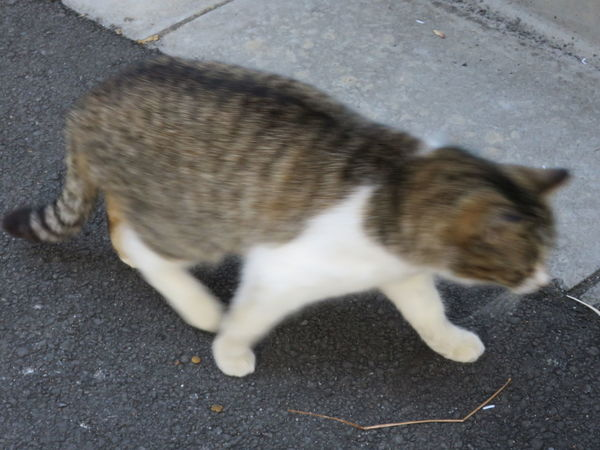 Cat Walking Day Domestic Animals Domestic Cat No People One Animal Outdoors Stray Cat Street