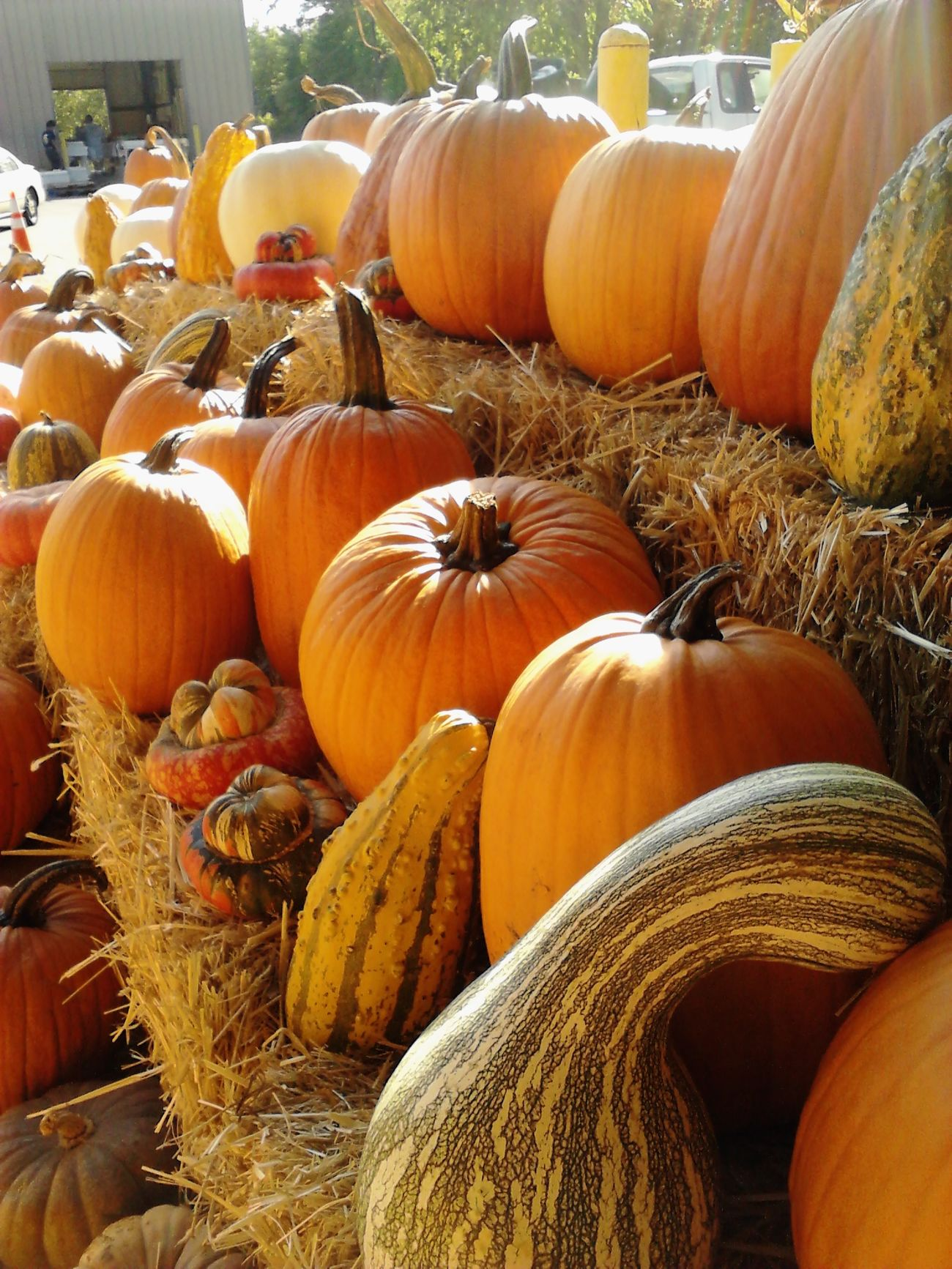 Colors Of Autumn Farm Markets Charlotte Weekend EyeEm Best Shots