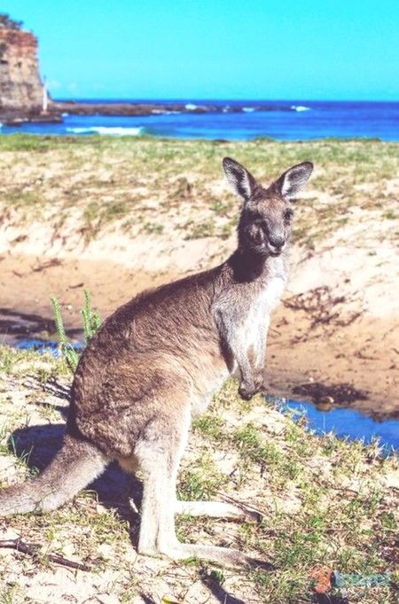 My Country In A Photo Australia Kangaroo Basically Accurate
