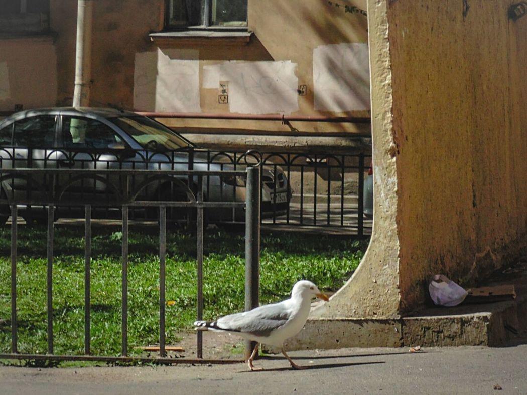 Хозяин жизни Bird Enjoying Life Hello World OpenEdit Saint_P Спб Spb Followme