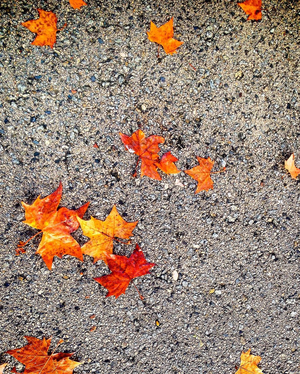 orange color, autumn, high angle view, leaf, outdoors, no people, change, day, nature, maple leaf, beauty in nature, close-up, maple