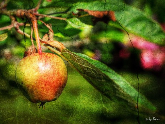 Fruit Growth Selective Focus Nature Plant Beauty In Nature Green Agriculture EyeEm Best Shots The Great Outdoors - 2016 EyeEm Awards EyeEm Best Edits Tranquil Scene Capture The Moment Non-urban Scene