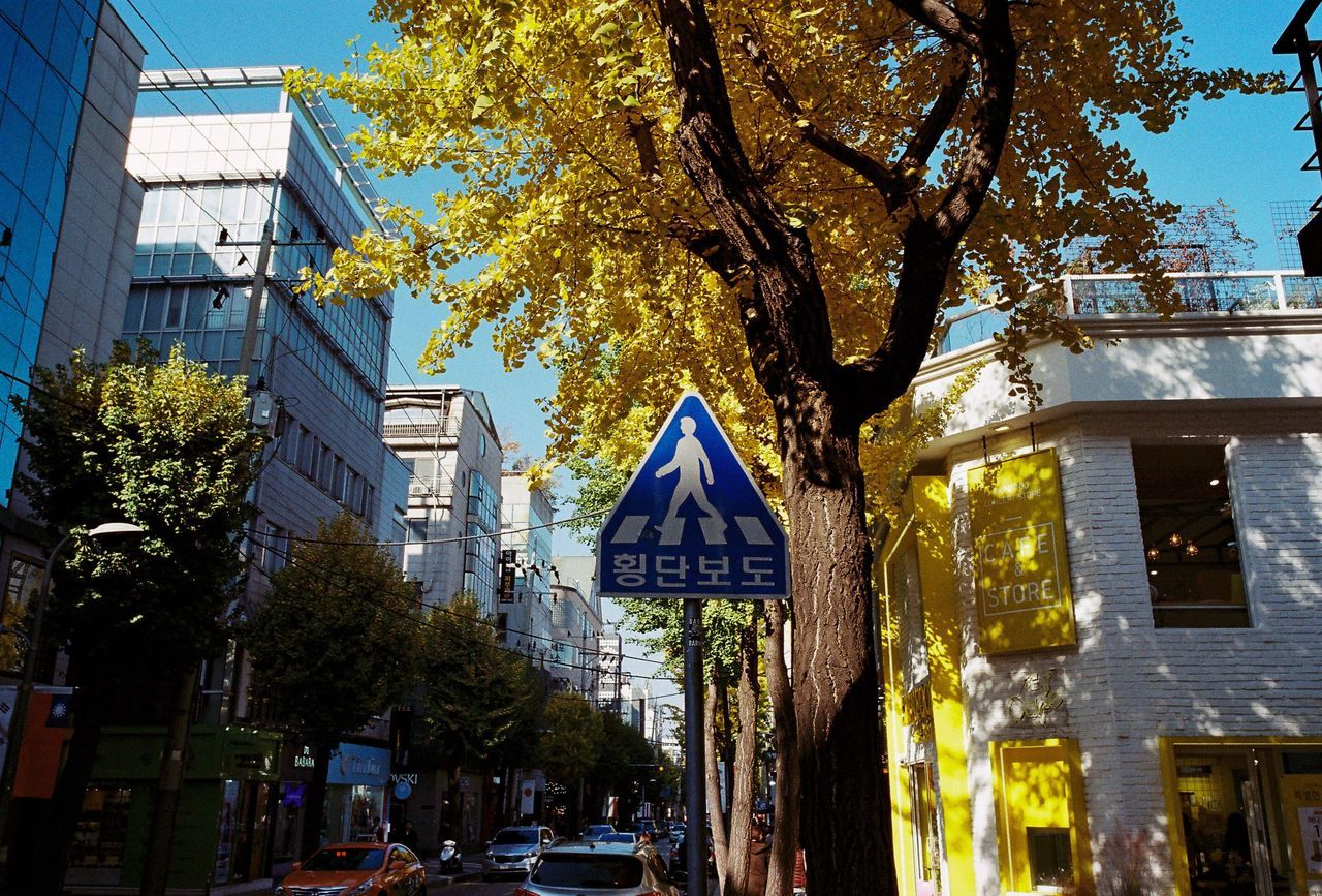 Tree Outdoors Day Yellow Leaves Autumn Road Sign Street Autumn Colors