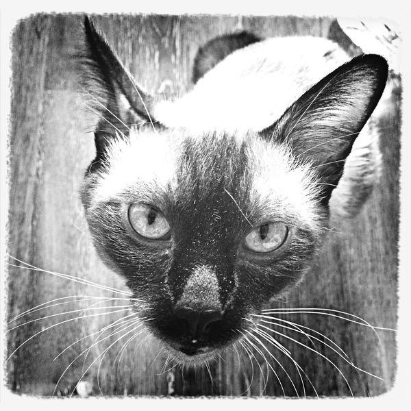 Crazy Kitty