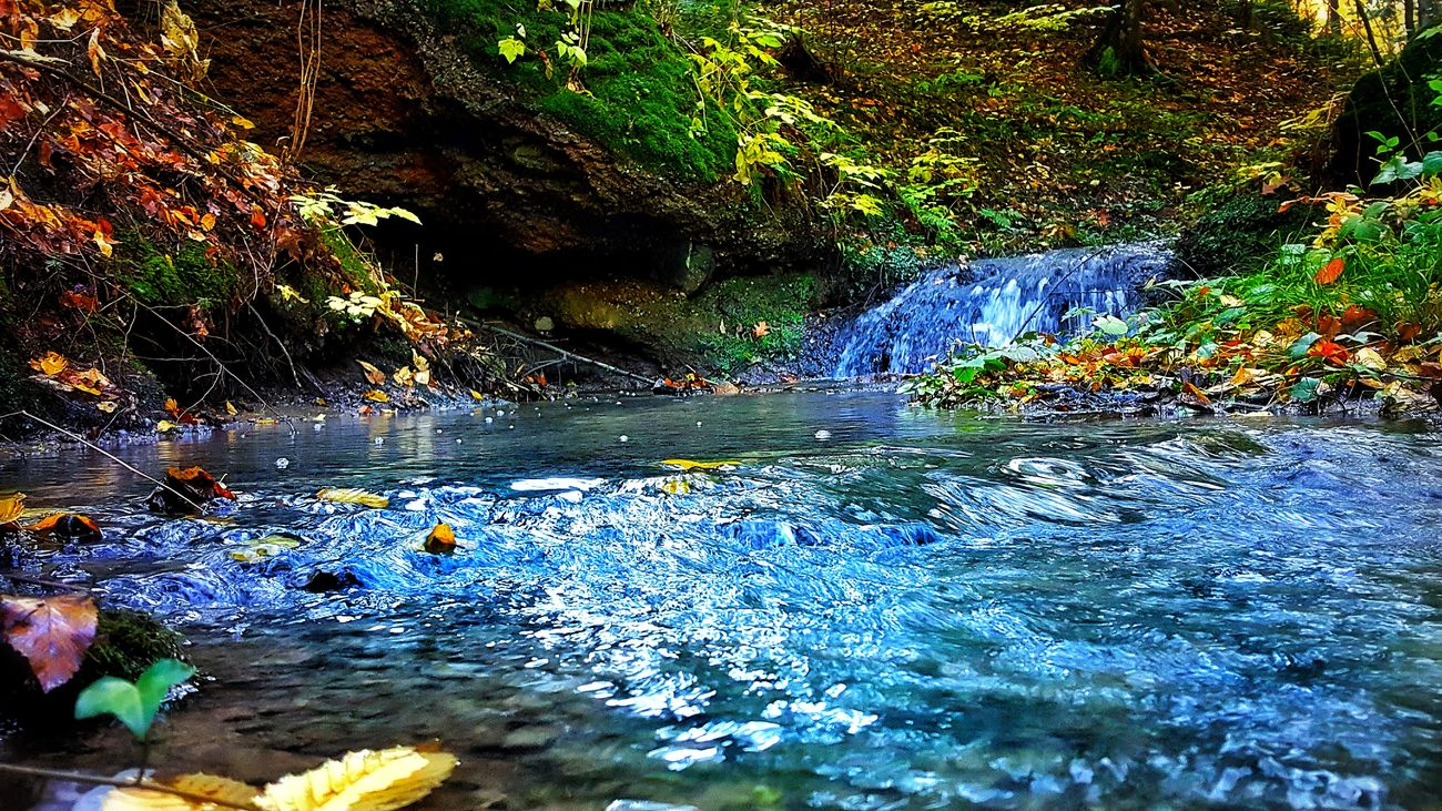 Autumn Close-up Day Fall Forest Nature No People Outdoors Poland River Stream Tree Water Waterfall
