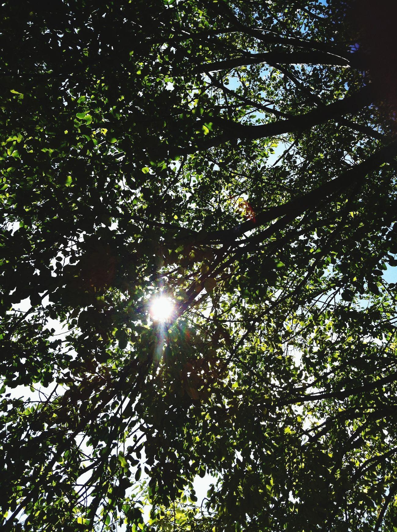 Nature Sunny London