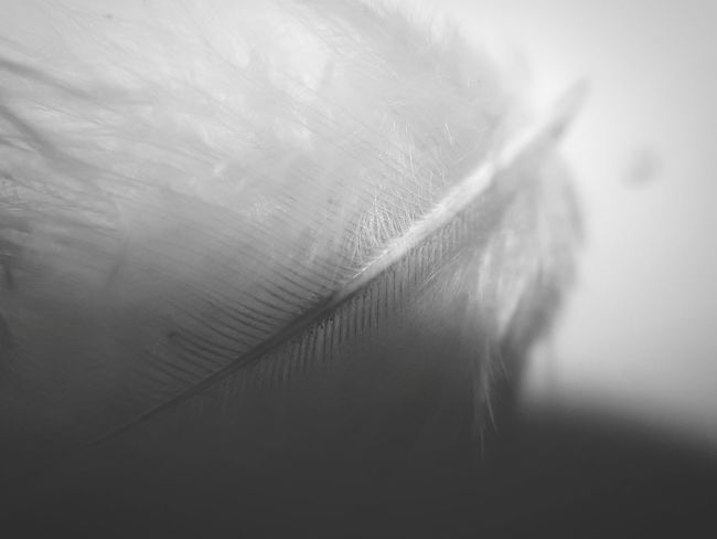 Monochrome Photography Shadow Nature No People Close-up Water Winter Cold Temperature Day Snow Outdoors Horizontal Mobilephotographyph Abstractions In BlackandWhite Abstract Nature Abstract Photography Feather  Dreamlike Surealism Angel Wings