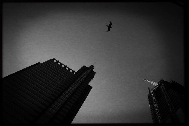 Objet d'air. Streetphoto_bw Street Photography Streetphotography Commuting My Commute IPhoneography Photojournalism Reportage Documentary EyeEm Best Shots Eye4photography  Shootermag_usa EyeEm Monochromatic Storytelling Chicago Architecture Bird Lookingup Building