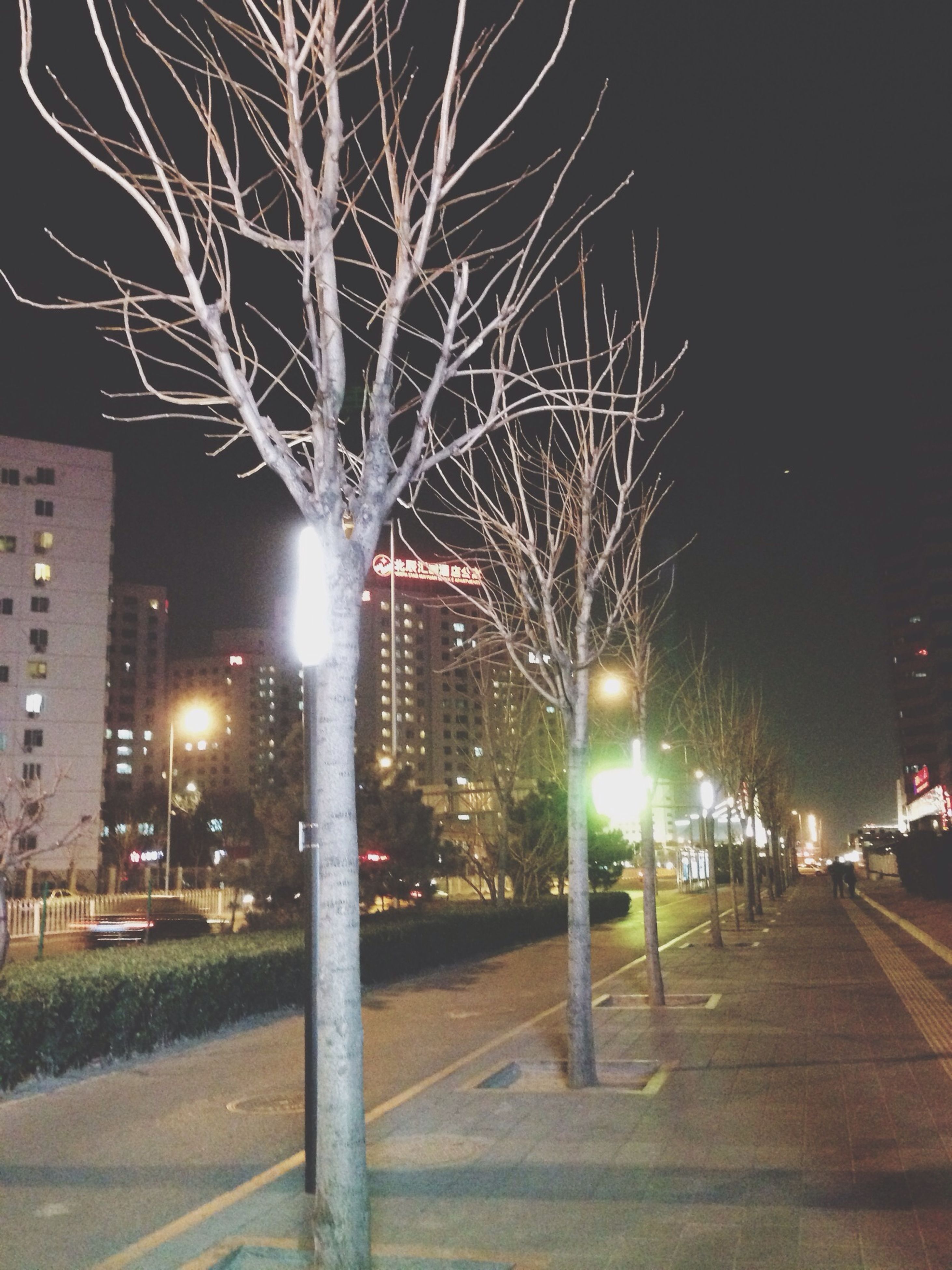 illuminated, night, building exterior, architecture, city, street light, built structure, tree, lighting equipment, street, bare tree, branch, sky, incidental people, road, city life, outdoors, city street, building, transportation