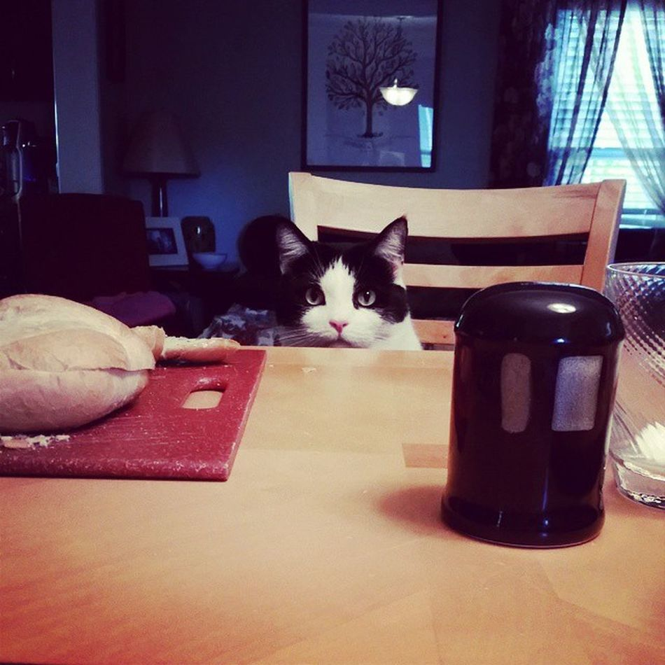 Richardthecat is waiting for his dinner to be served! Catsatthedinnertable Wheresmyfancyfeast