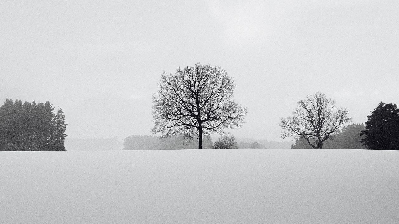 Beauty In Nature Black And White Photography Branch Cold Temperature Nature No People Outdoors Snow Snowing Snowing Day Tree Winter