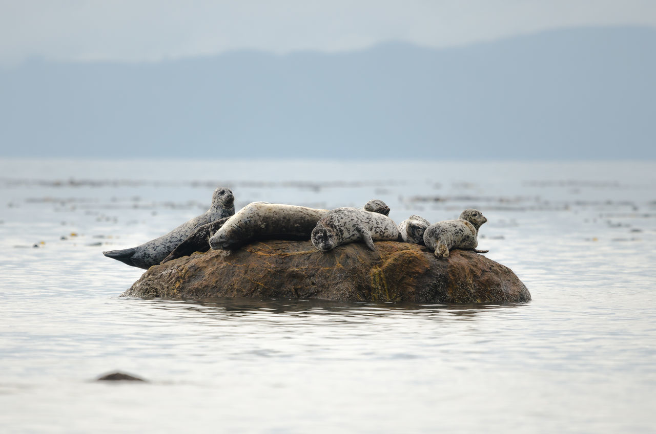 Animal Wildlife Funny Happiness Outdoors Relax Sea Seals Seals Chilling Seals On The Sea Shore Wildlife
