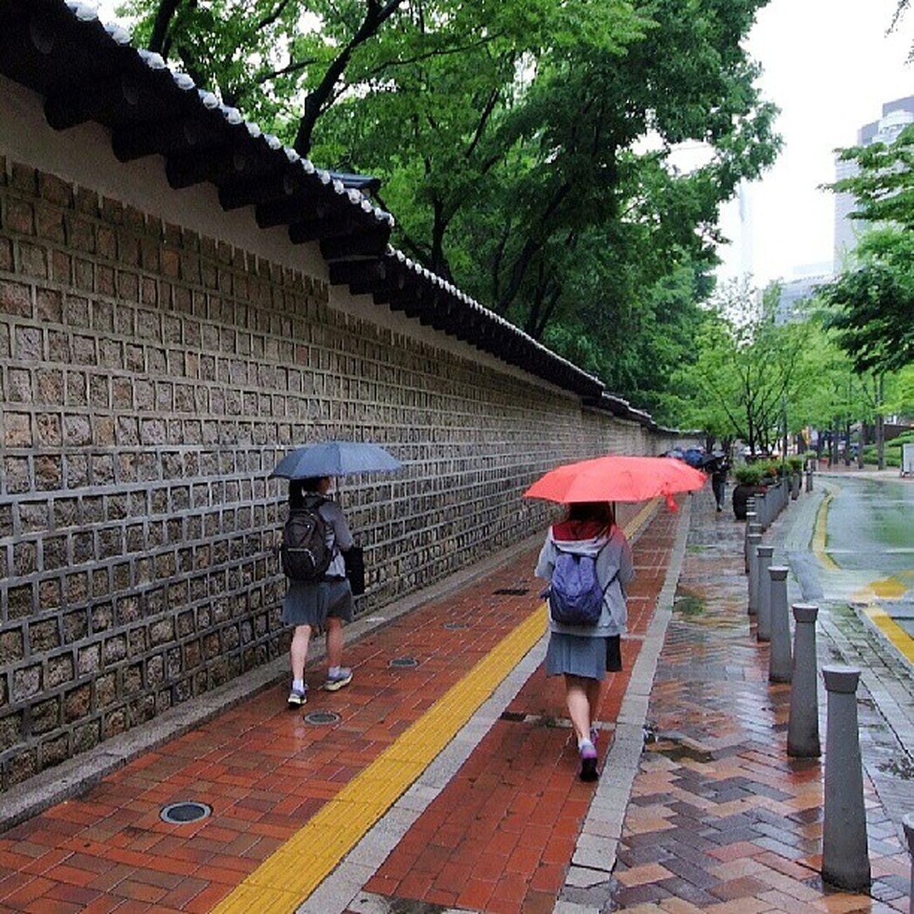Robin_theme15 City of rain 오늘도 어김없이 빗소리나는 아침 굿모닝이에요 :) 정동