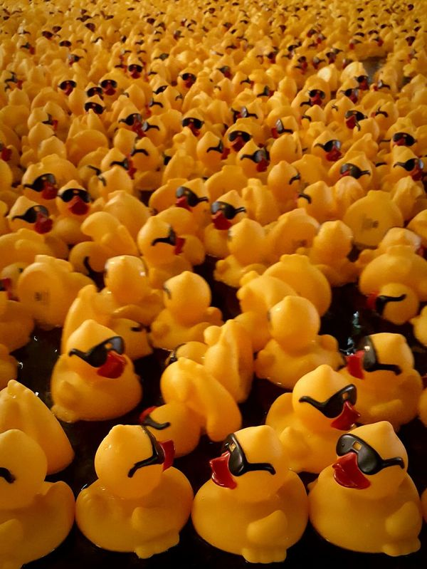 Cuack cuack... Ducks Duck Toys Cool Masive Repetition Life In Colors Yellow
