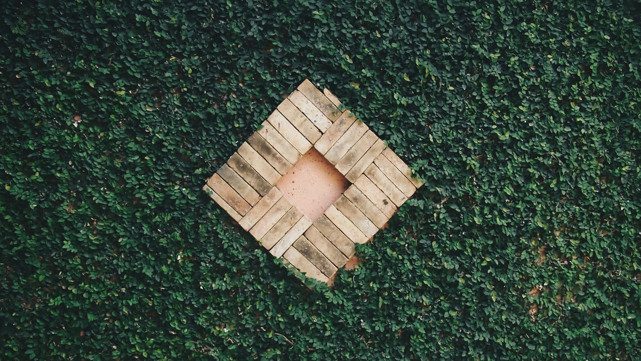 high angle view, grass, green color, outdoors, no people, day, nature