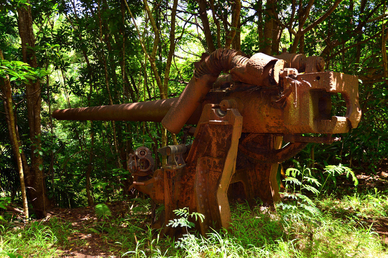 Anti-aircraft Artillery Green Jungle Ogasawara Island Old Battlefields Red Rust Rust Weapon
