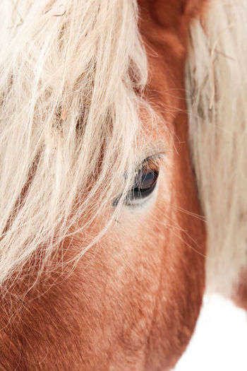 Animal Themes Close-up Day Haflinger Horseeye Human Body Part Human Eye Indoors  Mammal One Animal One Person Portrait