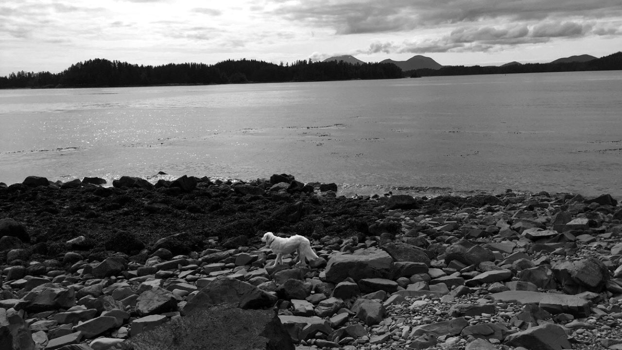 Alaska Sitka Water Ocean Sea Seascape Seaside Animals Dog Great Pyrenees