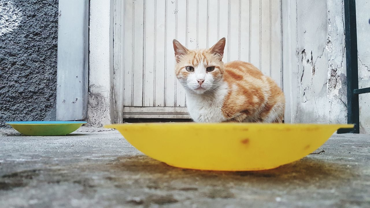 Animal Portrait Feline Animal Themes Looking At Camera No People Day Cat Stray Cat Stray Animal Food Plate Street