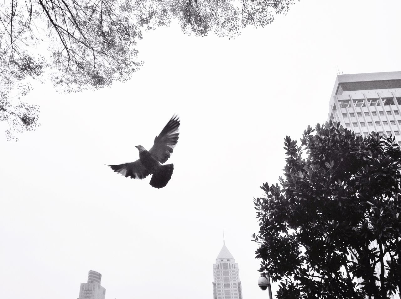 architecture, flying, tree, built structure, building exterior, mid-air, low angle view, clear sky, outdoors, sky, bird, spread wings, jumping, day, full length, no people, energetic, animal themes, city, nature