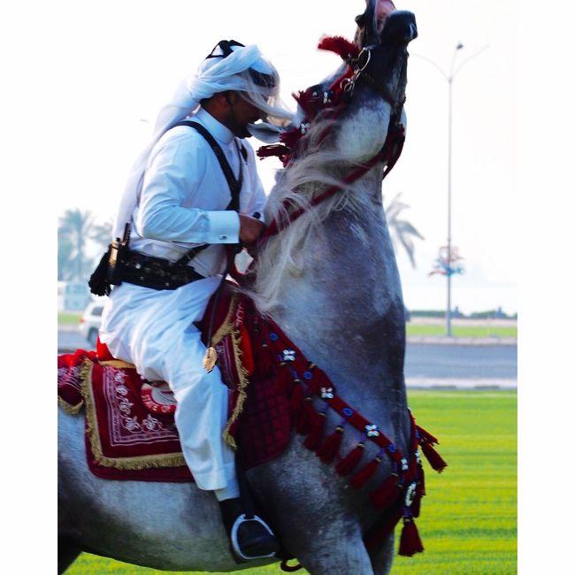 Arabian Horse Qatarlife Doha Horses Cavalry Corniche Qatar