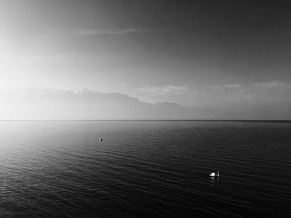 Lakesideview Nature_collection Lavaux Nature Photography EyeEmBestPics Dezaley Lakeside EyeEm Best Edits Switzerlandpictures (null)Epesses Mountains And Sky (null)EyeEm Nature Lover