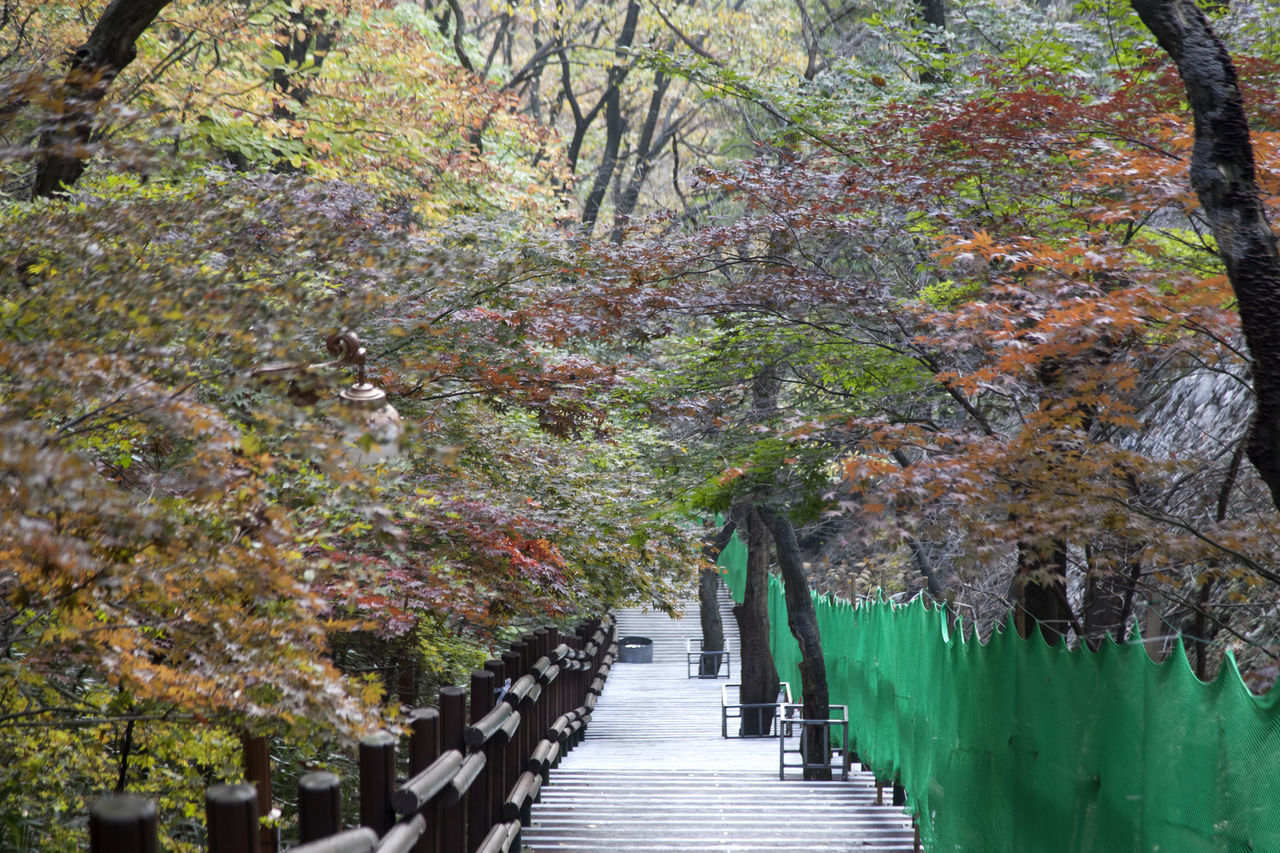 autumn in Maisan Mountain, Muan, Jeonbuk, South Korea Autumn Autumn Colors Autumn🍁🍁🍁 Beauty In Nature Day Fall Forest Forest Photography Maisan Mountain Nature No People Outdoors Stairway The Way Forward Tranquility Tree