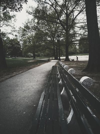 Park Set RahimNoel Rahim NYC NY New York Vivid Central Park - NYC Green