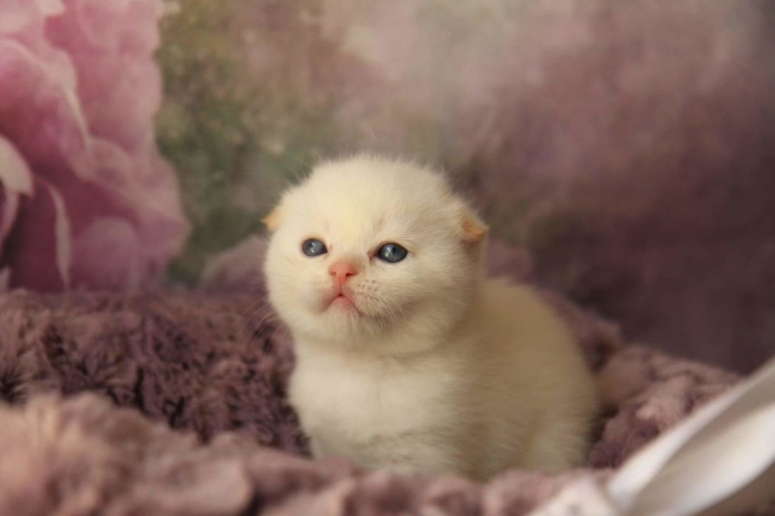 Pets Domestic Cat One Animal Domestic Animals Animal Cute Feline Portrait Looking At Camera No People Kitten Mammal Animal Themes Day Close-up Indoors  Persian Cat