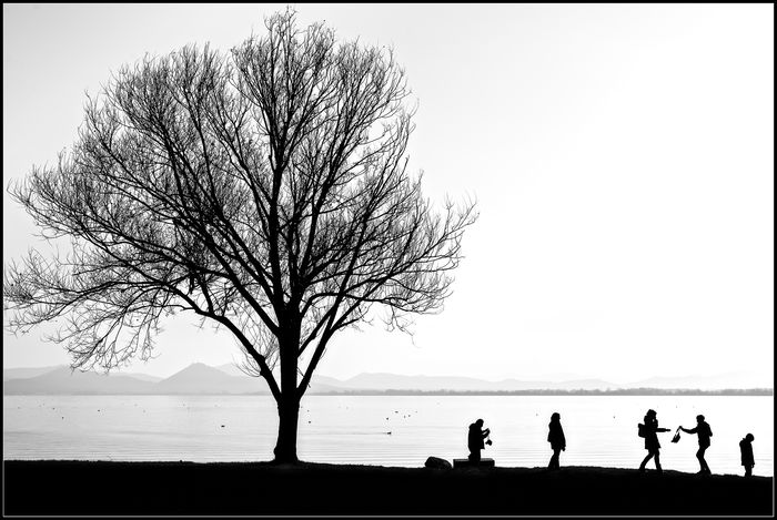 Still Life Bare Tree Beauty In Nature Calm Castiglione Del Lago Contrast Family Lake Lakeshore Lakeside Life In Motion Nature New Year Outdoors Person Scenics Silhouette Solitude Still Life Tranquil Scene Tranquility Trasimeno Water People And Places.