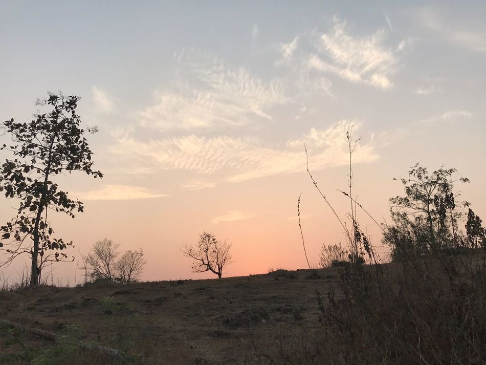Nature Tranquility Beauty In Nature No People Sunset Sky Tranquil Scene Tree Nosun Nature Nature Photography Naturelandscape Outdoors Nofilters #naturebeautiful #amazing IPhoneography Natural Pattern